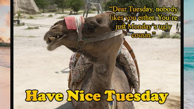 Tuesday Funny Quotes