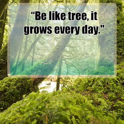 Inspirational quotes about trees Quotes on importance of trees Planting Tree Quotes